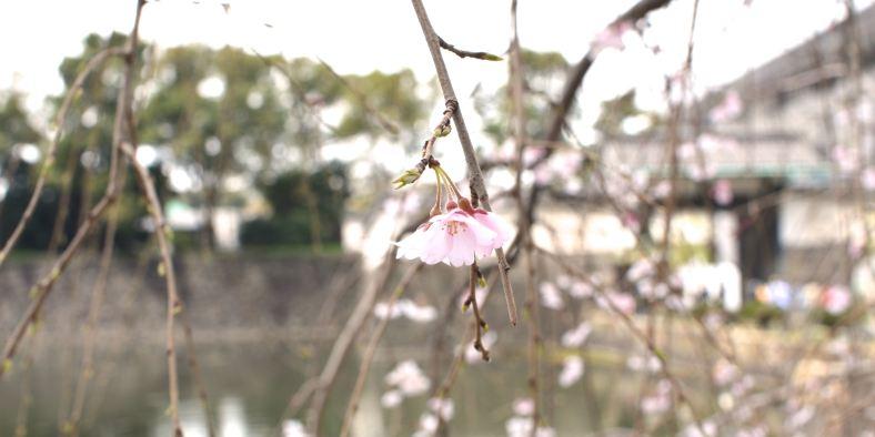 sakurapalace1